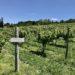 FingerLakes Riesling Vineyard